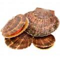 Морской Гребешок живой (250-450г)  1кг (Сахалин)_1